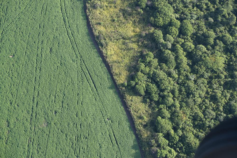 Deforestacion-20-07-08-02