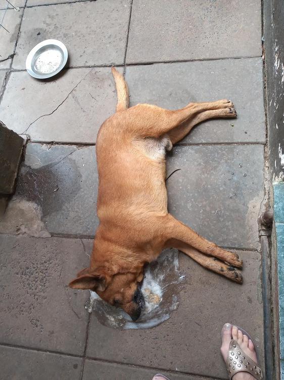 Perro-envenenado-20-06-26-03
