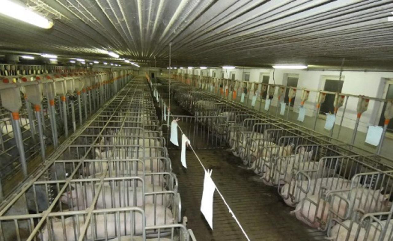 Granja-de-cerdos-20-08-27-103