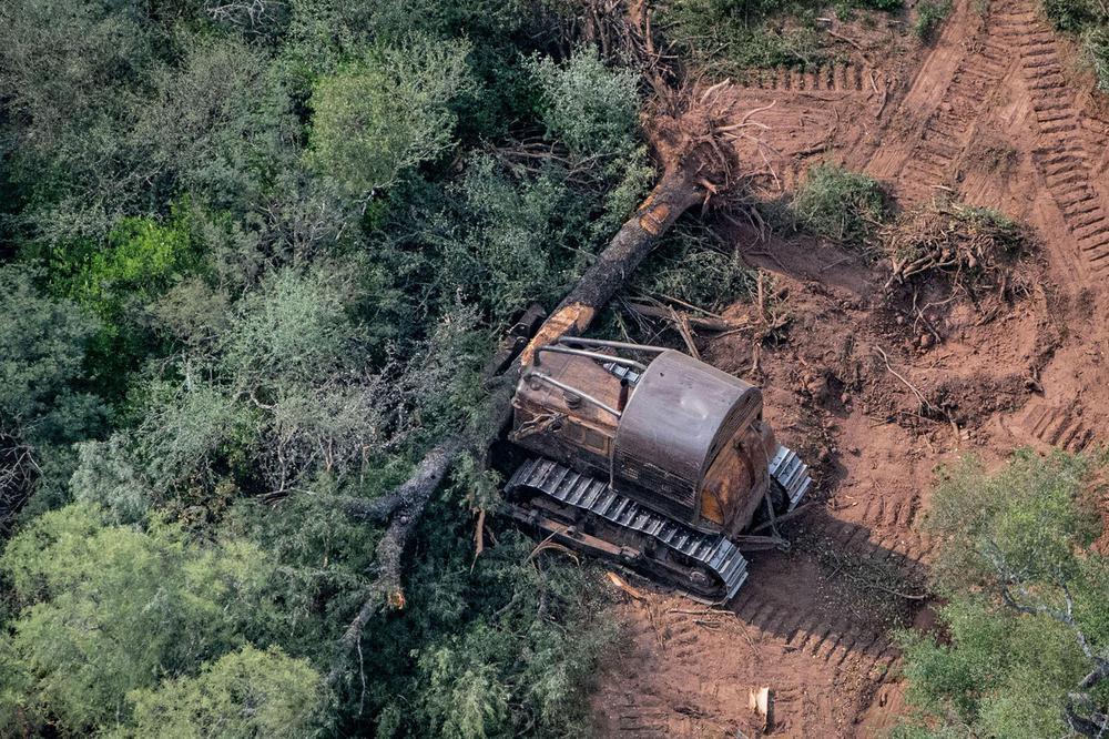 Deforestacion-20-07-08-05