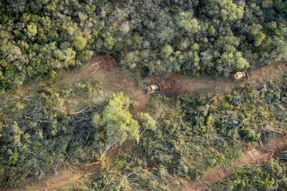bosques 2020-08-11 (01)