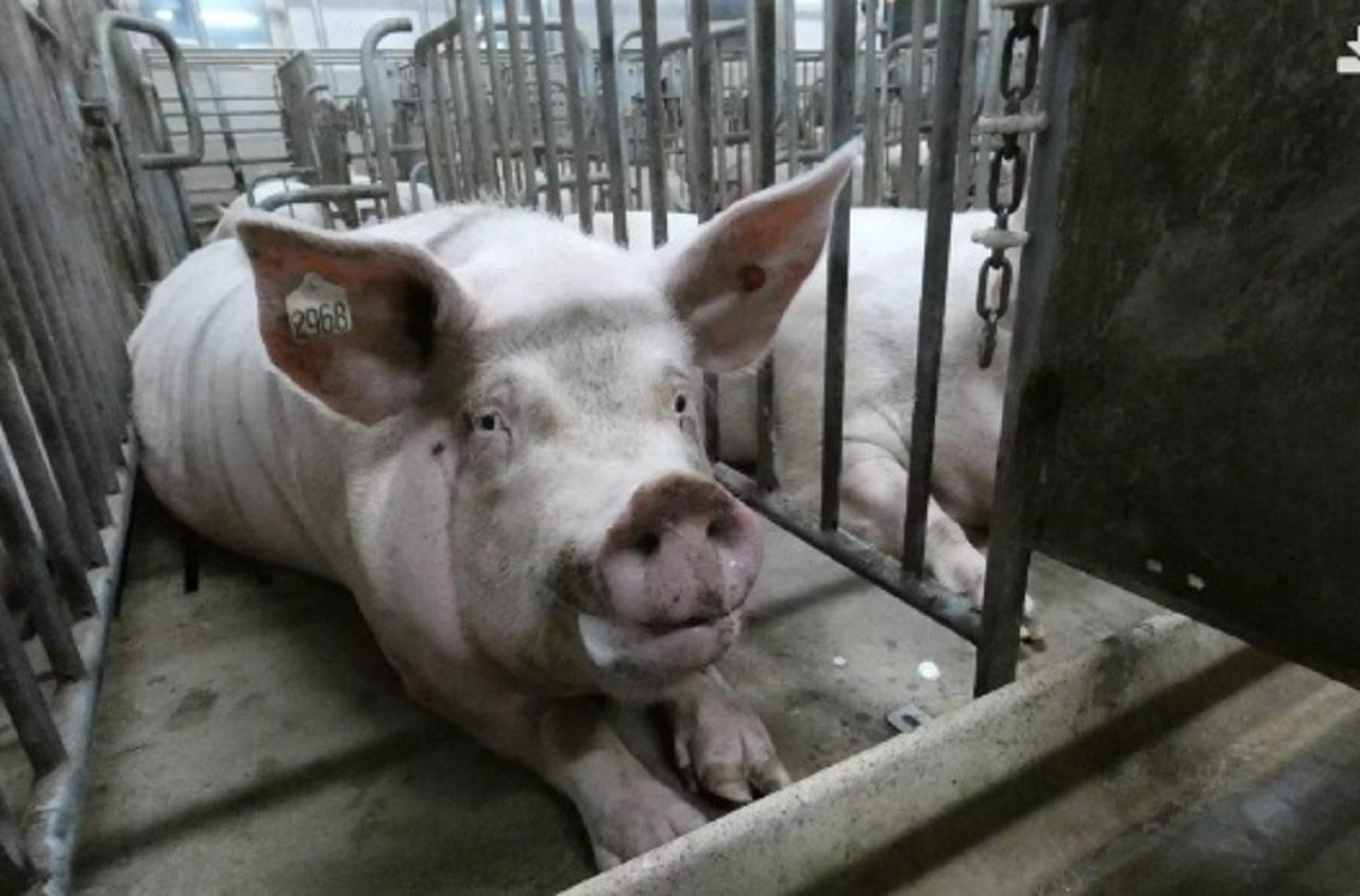 Granja-de-cerdos-20-08-27-102