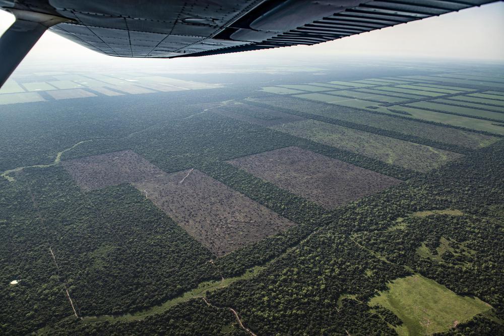 Deforestacion-20-07-08-03